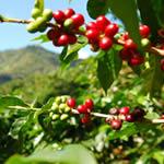 Bio Kaffee